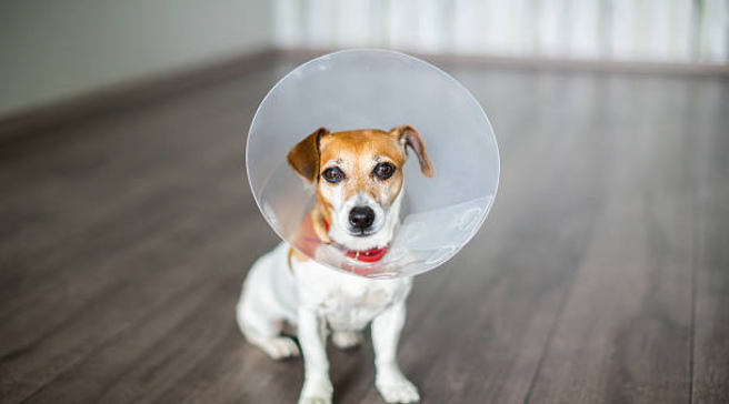 8 Of The Best Alternatives To The Cone Of Shame Dog Cone