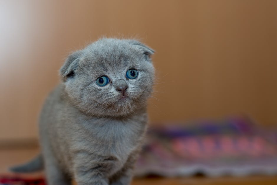 5 of the Best Cat Litters in 2019   Our Fit Pets