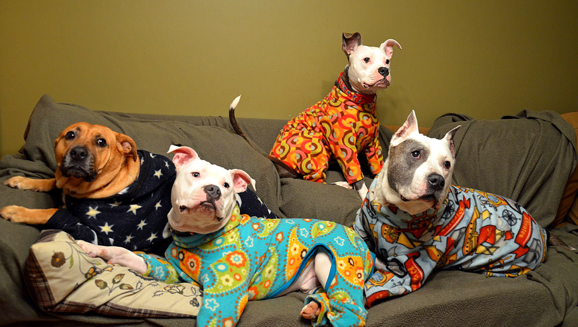 Best Dog Pajamas to Keep Your Fur Baby Cozy | Our Fit Pets