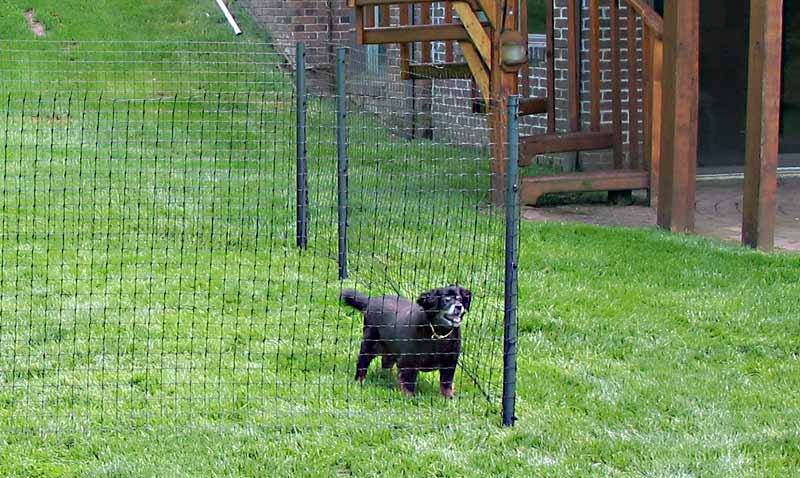 Top 10 Best Fence for Dogs | Our Fit Pets
