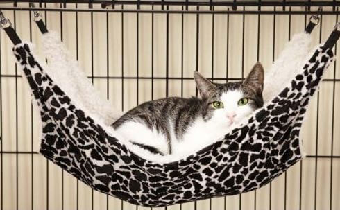 The Best Cat Hammock For Your Kitty | Our Fit Pets
