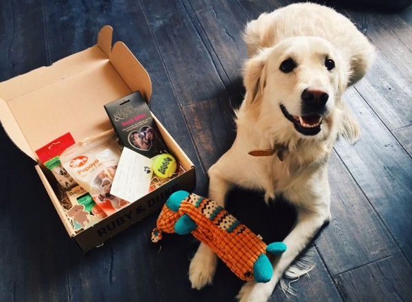The Best Dog Subscription Boxes in 2021 | Our Fit Pets