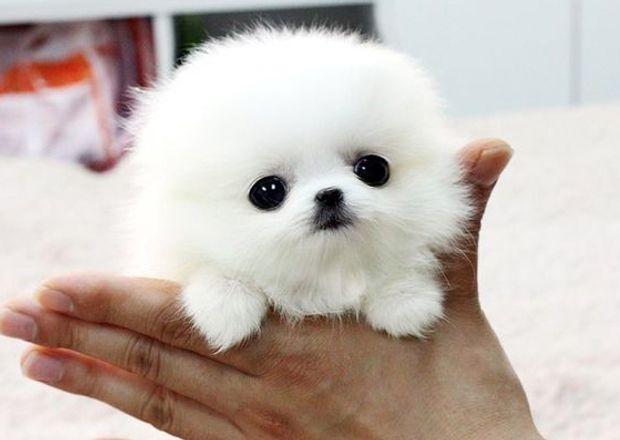 14++ Cute dog names ending in o ideas