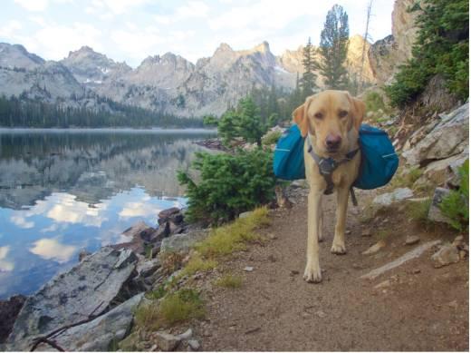dog hiking 2